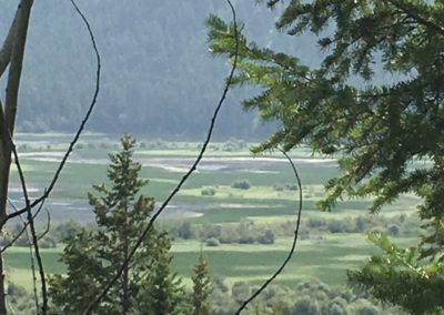 Columbia Wetland