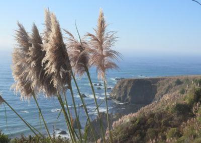 Mendociono Coast