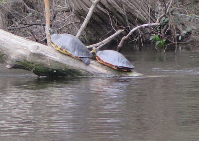 Begegnung am Fluss