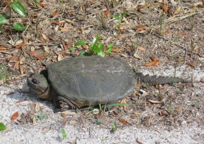 Camping - Schildkröte