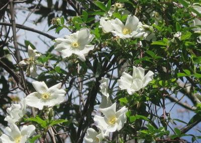 Frühling in Florida