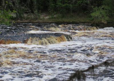 Suwannee Rapids