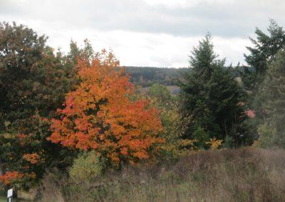 16_Herbst im Harz